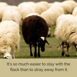 black sheep straying
